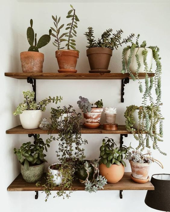 Plantas De Interior Pequenas