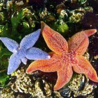 6 interesantes datos sobre las estrellas de mar, criaturas estelares que te…