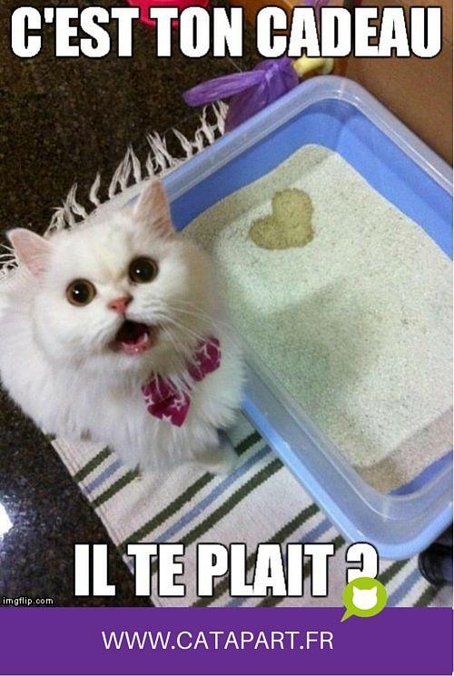 Ce chat blanc a une petite surprise pour vous ! C'est trop gentil !!! :D :D