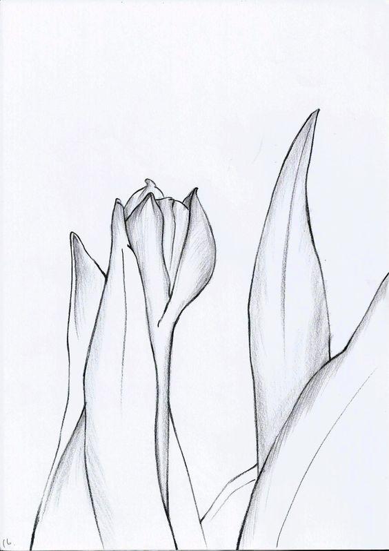 Tulipa_016