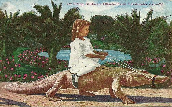 children and alligators - Google Search