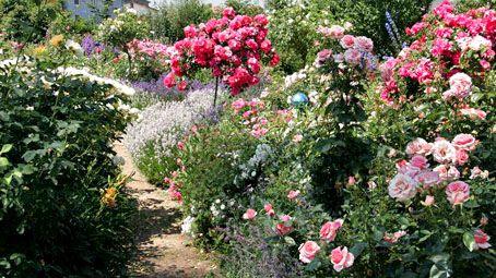 Die sch nsten rosenbegleiter delphiniums oder and irises for Gartenteich aus reifen