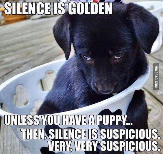 TRUE! I can't remember a time Joy was silent as a puppy and something hadn't been chewed/destroyed/knocked over.