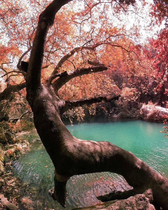 Tree Man by onderkoca