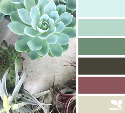 Succulent Hues - http://design-seeds.com/index.php/home/entry/succulent-hues28