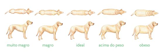 Dieta Cozida para cães   Cachorro Verde