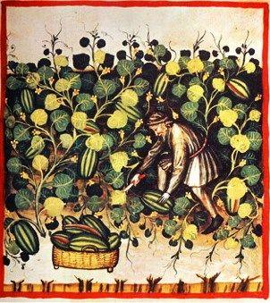Tacuinum Sanitatis, ca. 1400 Watermellons
