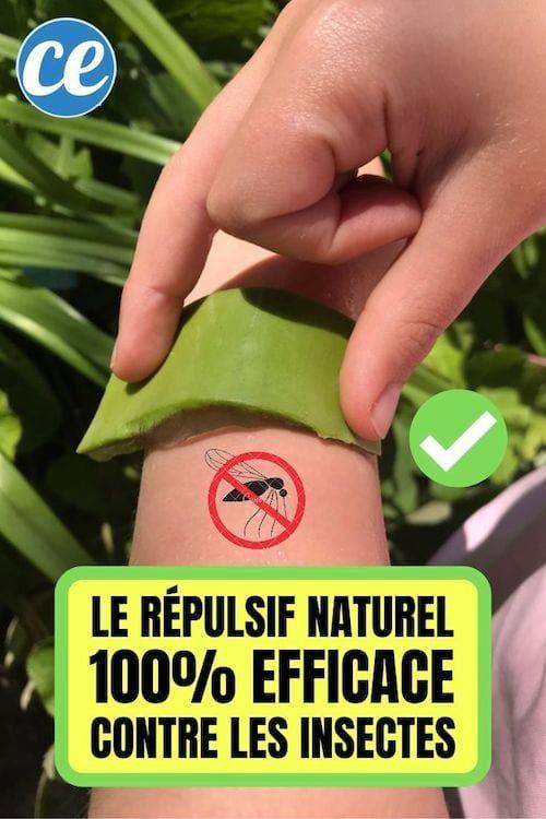 Fini Les Piqures De Moustiques Avec Ce Repulsif Naturel 100