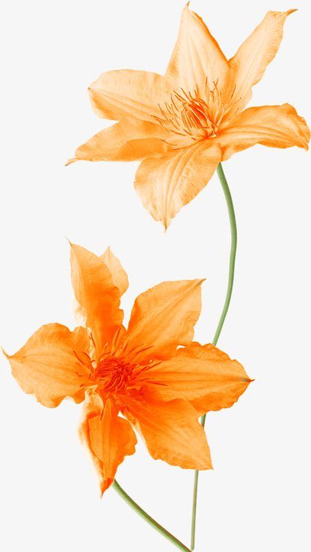 Flores Decoracao Laranja Duas Flores Flores Laranja Arquivo Png E Psd Para Download Gratuito Flower Clipart Orange Flowers Flowers