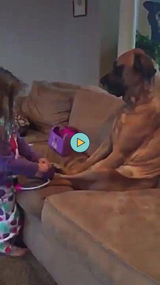 Criança verificando a pressão do seu cachorro