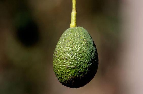 Plenty of avocados to go around for the Super Bowl dips | The Breakdown | 89.3 KPCC