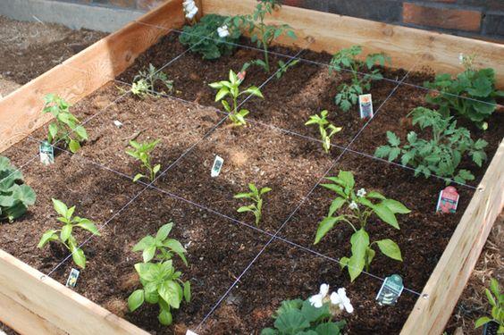 Square-Foot planting.
