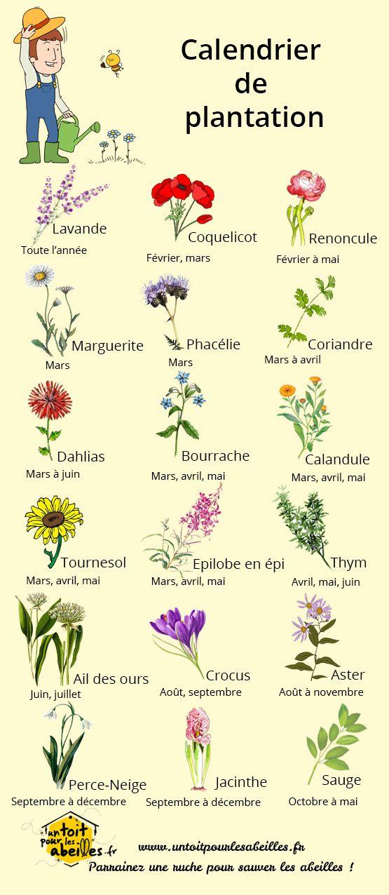 Calendrier de plantation des fleurs pour les abeilles … | Pinteres…