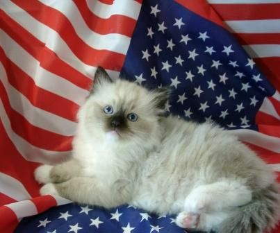 Happy 4th Happy 4th of July from Floppycats! http://www.floppycats.com/happy-4th-of-july-from-floppycats.html