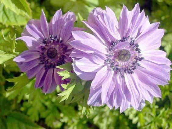 ¿Qué podemos cultivar en las zonas más soleadas?