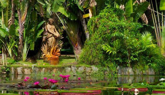 Rio de Janeiro, Brasil: Um passeio pelo Jardim Botânico pode render belas imagens -  Foto: Foto do leitor Eduardo Albuquerque / Eu-Repórter/O Globo.