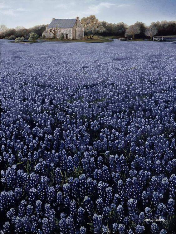 Lavandelveld, ergens in Frankrijk. Lavendel, mijn lievelingsgeur om in te slapen. Dat geeft me rust.