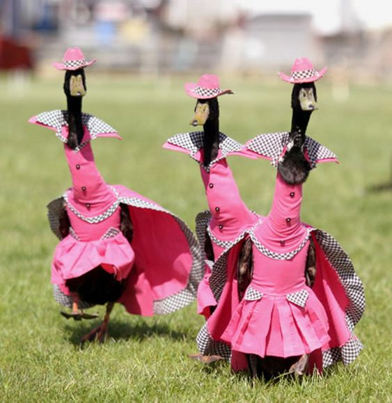 Fashion is for the birds....These are the Pink Feathered Gals instead of the Red Hat Society