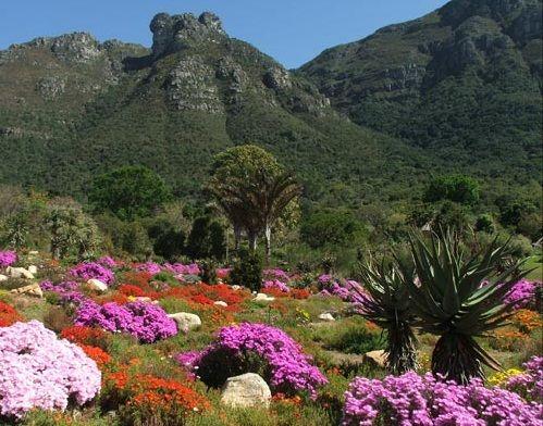 Kirstenbosch National Botanical Gardens Indigenous Plants