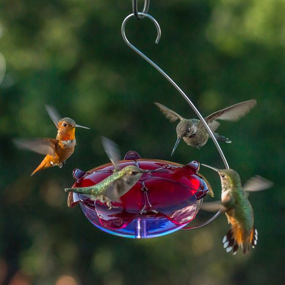 Droll Yankees' Announces Its Newest Line of Hummingbird Feeders, The Ruby Sipper™, a Family of Four Nectar Bird Feeders. Click to read more!