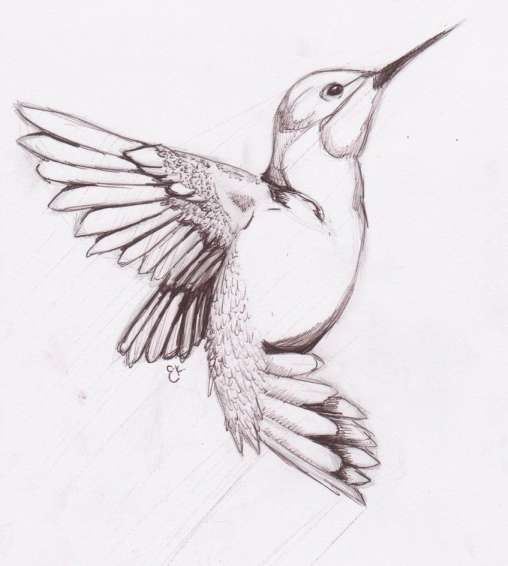 16 Humming Bird Sketch Sketch Drawingpencilwiki Com In 2020 Bird Sketch Bird Pencil Drawing Bird Drawings