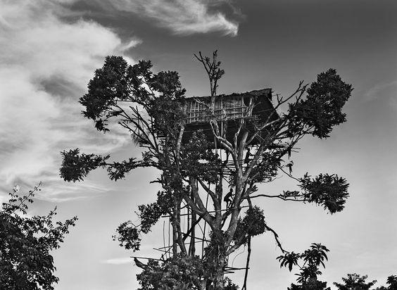 Gênesis | Os korowai vivem em pequenos grupos familiares em casas nas árvores, construídas normalmente entre seis e 25 metros acima do chão. Iran Jaya, Indonésia. 2010.