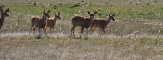 Deer Herd at the Arsenal