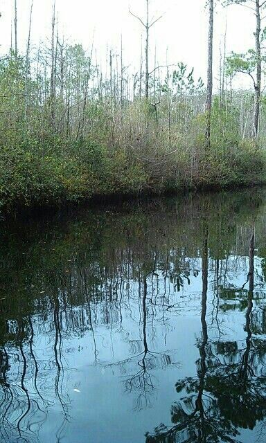 Georgia swamp Dad and went to
