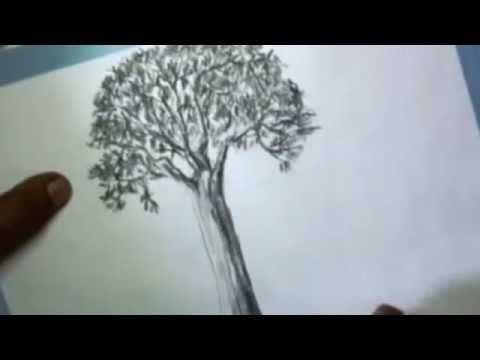Cara Menggambar Pohon Yang Baik Dan Benar Untuk Test Psiko Pernah Diminta Menggambar Pohon Ketika Psikotest Ini Dia Macam Macam Tes Ps Di 2020 Tanaman Pohon Gambar