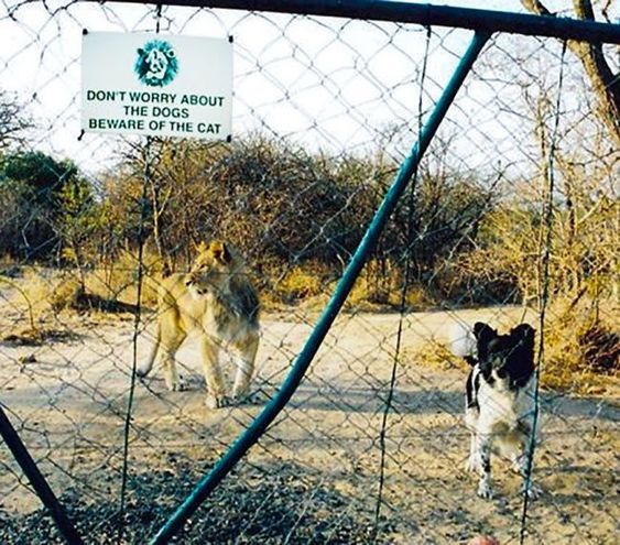 """15 + αστείες φωτογραφίες με πινακίδες """"Πρόσεχε σκύλος"""" και τα απίστευτα κατοικία"""