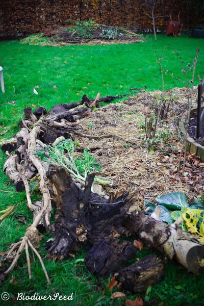 BiodiverSeed Edible Forest Gardening 101: Water Management with Hügelkultur Berms