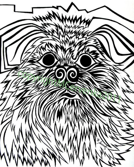 Brussels Griffon by Matt Cervenka Art. Brussels Griffon dog art portraits, photographs, information and just plain fun. Also see how artist Kline draws his dog art from only words at drawDOGS.com http://drawdogs.com/product/dog-art/brussels-griffon-dog-portrait-by-stephen-kline/