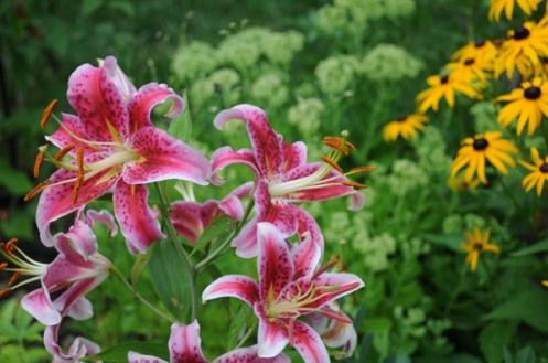 stargazer lilies were in my wedding almost 16 yrs ago.. still beautiful!