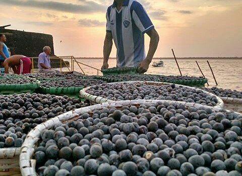 🏆DESTAQUE🏆🏆 . . #belemcity 🔹🔹🔹🔹🔹🔹🔹🔹🔹🔹🔹🔹🔹 📷 photo of the day 📷 ⭐️ artista: @sergioldesouza. 🔎 selected: @giovannibml . 🔹🔹🔹🔹🔹🔹🔹🔹🔹🔹🔹🔹🔹 . 🏆 parabéns 🏆 . Sua foto foi selecionada como umas das melhores do dia . Continue usando #belemcity em suas publicações. . #belemdopara  #amazonia  #belemlifestlyle #amazon #cidadedasmangueiras #belem  #belem400anos #visitebelem #veropeso #acai #feiradoaçai #círio #cirio2016 . 🔹🔹🔹🔹🔹🔹🔹🔹🔹🔹🔹🔹🔹🔹