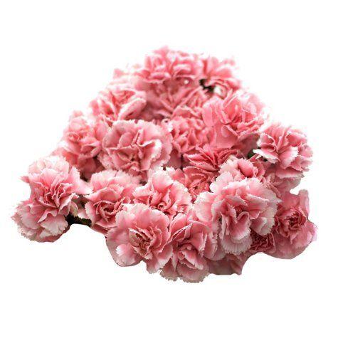 Mini Carnations Pink Choose Stem Count Mini Carnations Carnations Carnation Wedding Centerpieces