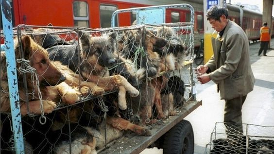 Petition · Chinese Government Stop Allowing The Slaughtering Of Cats, Dogs & Rabbits For Their Fur & Meat In China & Pass A Law To Make It Illegal! · Change.org