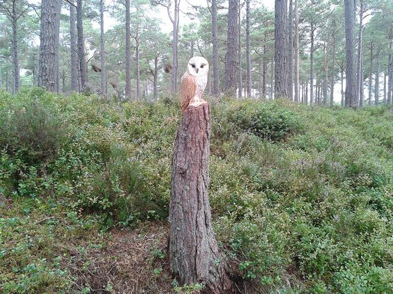 Owl carved into a treestump, Carrbridge by Jamiemacdougall, it's done so classy