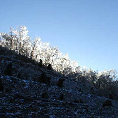 After the ice storm of 2004