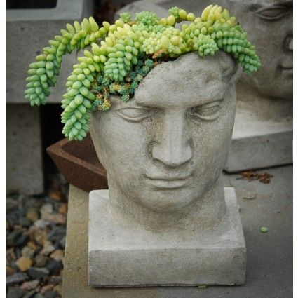 Sedum morganianum - Succulents - Avant Gardens Nursery & Design
