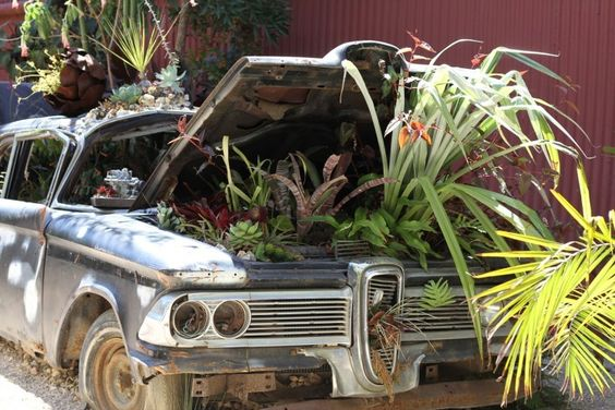 Tips for growing succulents outside... e.g. flora grubb car
