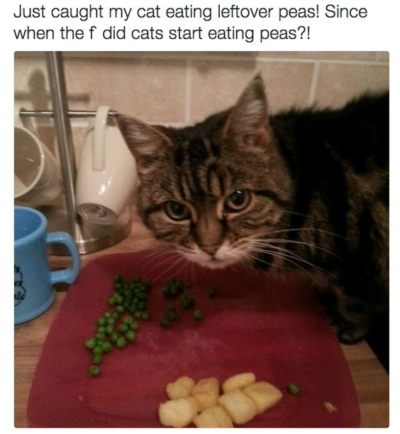 Image result for cat eating peas
