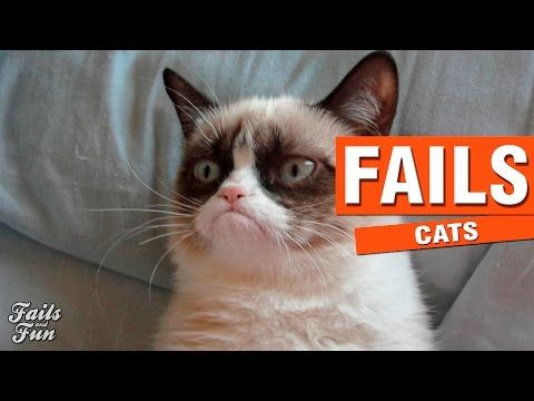 INTENTA NO REIRTE CON ESTE VIDEO 2 | Cat Fails Compilation | Vine Compilation - http://positivelifemagazine.com/intenta-no-reirte-con-este-video-2-cat-fails-compilation-vine-compilation/ http://img.youtube.com/vi/0T_CBFUfMT8/0.jpg  If any clip belongs to you let me know for to delete it.* Compilation Fails of Cats | Compilación Fails y Caidas Graciosas De Gatos. In this compilation you will see … ***Get your free domain and free site builder*** [matched_content] ***G