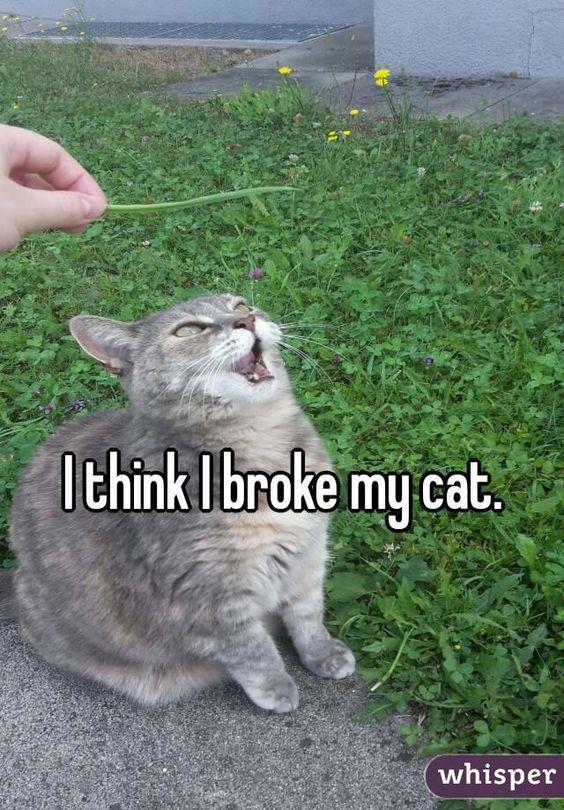 I think I broke my cat.