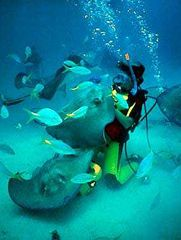 Cuban Scuba Diving- not sure i want to get that close to those since i've seen what they can do!