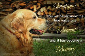 Beautiful Old Dog Quotes