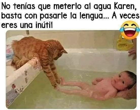 Instacatscr Memes Gatos Memes Graciosos De Animales Memes Divertidos Meme Gato