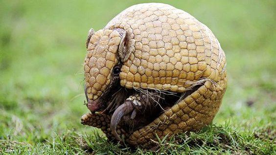 =Naturezamais=: =Fauna brasileira tem 1 051 espécies ameaçadas de ...