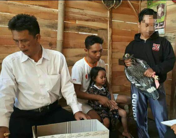 Warga Pekalongan Temukan Elang Jawa Terjatuh di Jaring Sawah