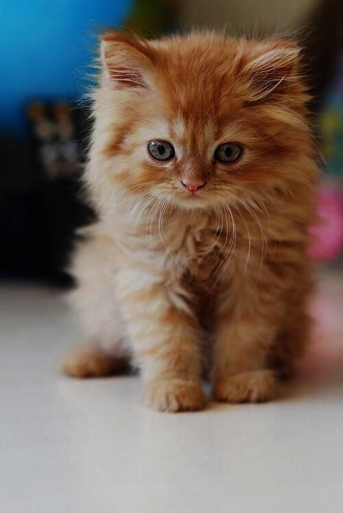 Cats And Kittens For Sale On Gumtree Like How To Draw Really Easy Cute Animals Behind Cute Jungle Animals Clipart Either Cute Ani Kittens Cutest Cute Cats Pets