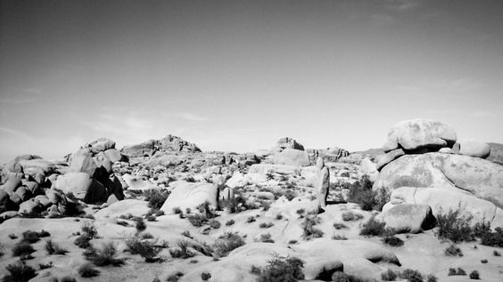 Black And White Friday 44/2015  Joshua Tree National Park